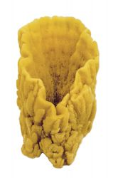 decorative Caribbean sponge, large