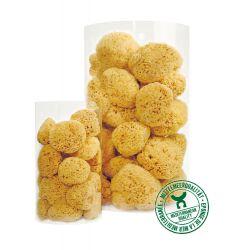 Assortment of sponges