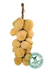 Sponge bouquet
